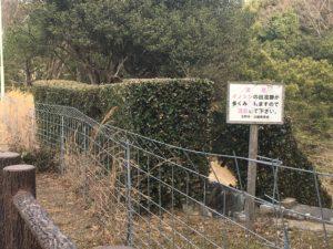 イノシシの柵